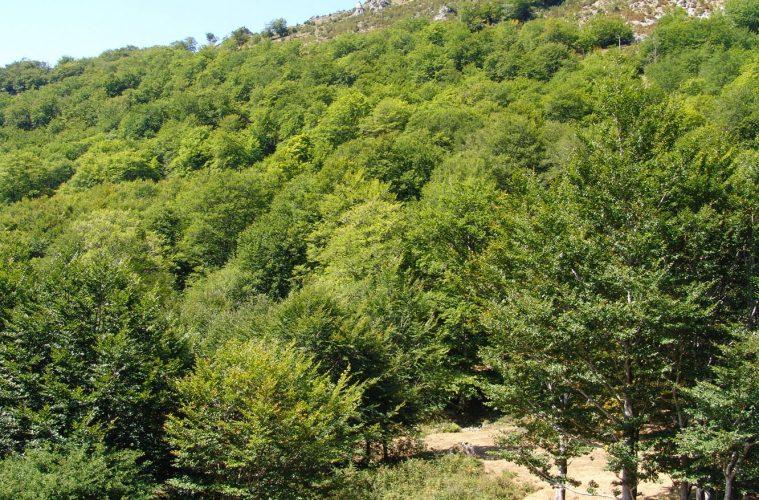 bosques1