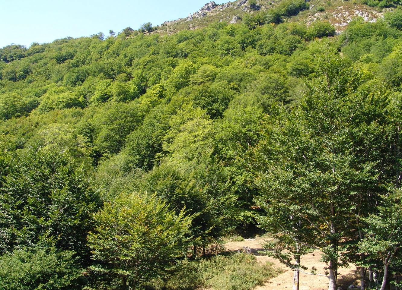 Los bosques subterr neos entre r os ahora for Vivero el ceibo